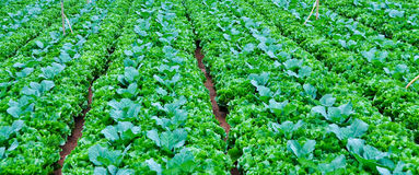 Warzyw pola w średniogórzu, Dalat Zdjęcie Stock