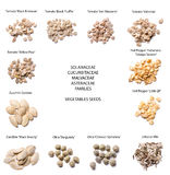 Warzyw ziaren różne rozmaitość Zdjęcie Stock
