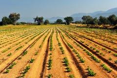 Warzywa gospodarstwo rolne zdjęcie stock