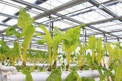 Warzywa hodowlani warzywa Zdjęcia Stock