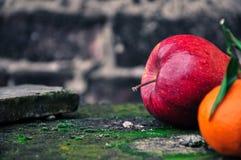 Warzywa 4 i owoc Zdjęcie Royalty Free