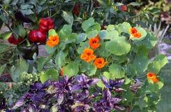 Warzywa i ziele w garnkach Fotografia Stock