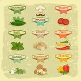 Warzywa, jedzenie royalty ilustracja
