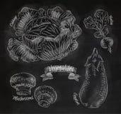 Warzywa kapusty, oberżyna, rzodkwie, pieczarki ilustracja wektor
