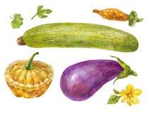 Warzywa malujący w akwareli Zucchini, oberżyna i kabaczek, royalty ilustracja