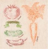 Warzywa marchewki, pomidor, chili pieprze, ogórek Obrazy Stock