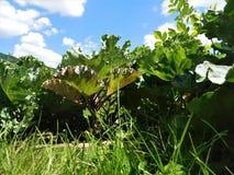 warzywa ogrodowe Obrazy Royalty Free