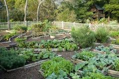 warzywa ogrodu Obraz Stock