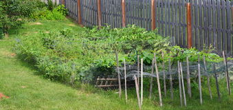 warzywa ogrodu obraz royalty free