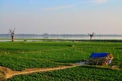 Warzywa pole blisko U-Bein mosta obrazy royalty free