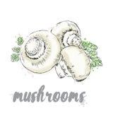 Warzywa rysujący ręką eps kartoteka zawierać wektorowi warzywa Jedzenie Akcyjny posiłek Pieczarki Szampinion ilustracja wektor