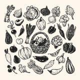 Warzywa, set Zdjęcia Stock