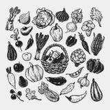 Warzywa, set Obrazy Royalty Free