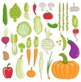 Warzywa ustawiający Obrazy Royalty Free