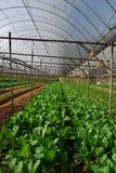 warzywa z gospodarstw rolnych Zdjęcia Royalty Free