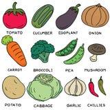 warzywo ilustracja wektor