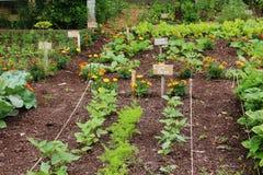 Warzywo ogród Obraz Royalty Free