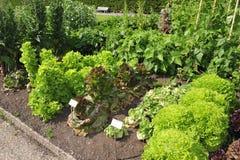 Warzywo ogród Fotografia Stock