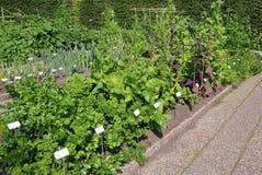Warzywo ogród Zdjęcie Stock