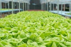 warzywo organicznie warzywo Zdjęcie Royalty Free