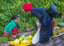 Warzywo sprzedawca w Myanmar Zdjęcie Stock