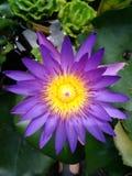 Was diese Blume ist lizenzfreie stockfotos
