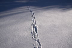 Was it a fox?. Animal footprints in the snow Stock Photography