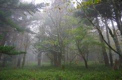 Foggy world royalty free stock image