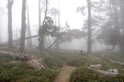 Foggy world stock image