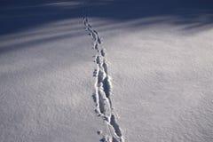 Was het een vos? Stock Fotografie