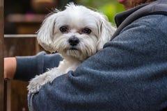 Was holding white dog Royalty Free Stock Photo