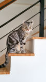 It was looking at you . Cats in my house, it was looking at you Royalty Free Stock Photo