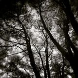 It was not us, it was a forest. Artistic look in black and white. Stock Image
