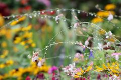 The wet flowers in summer. Stock Images