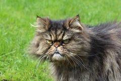 `, was Sie wünschen? ` - Katze mit Ausfragenausdruck stockfotografie