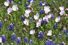 Wildflowers in East Texas. This was taken in East Texas, while driving around looking for nice images Royalty Free Stock Image