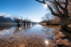 Scenic landscape of famous willow trees in Glenorchy, New Zealand royalty free stock image