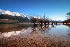 Famous willow tree row in Glenorchy, South Island, New Zealand royalty free stock image