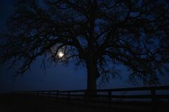 Fence a tree and moon just after sunset. This was taken in Glenrose Texas in 2017. I drove from Ft Worth just to get pics of this tree at sunset stock image