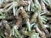 wasabi корня предпосылки Стоковая Фотография
