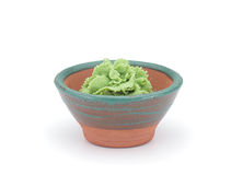 Wasabi in a clay sauce-boat isolated Royalty Free Stock Image