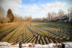 Wasabi farm in japan Stock Image