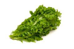 Wasabi Greens-Brassica juncea Royalty Free Stock Photos