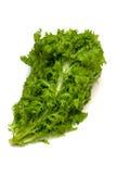 Wasabi Greens-Brassica juncea Stock Photo