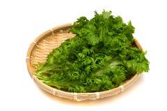 Wasabi Greens-Brassica juncea Stock Image
