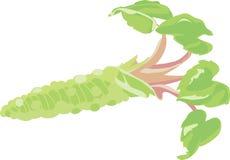 Wasabi Plant Royalty Free Stock Image