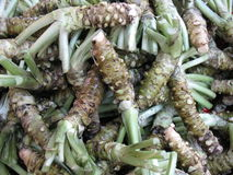 Wasabi root background. Lots of wasabi root in the background. A typical Japanese herb Stock Photography