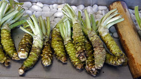 Wasabi roots. Cooled in water at daio farm in Japan royalty free stock photography