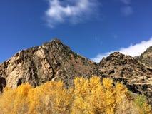 Wasatch山国家公园 库存图片