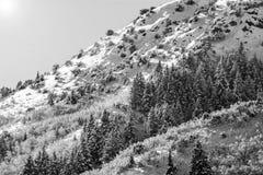 Wasatch-Bergspitzen in Nord-Utah in der Winterzeit Stockfotografie